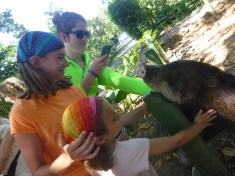 We were able to pet Perla.  Our guide said some Costa Ricans saw Americans on tv with potbellied pigs as pets and thought peccaries could be kept, too.