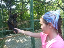 This spider monkey's former owner taught it to hold hands.
