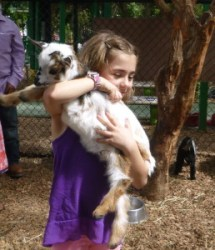Baby goats at the petting zoo