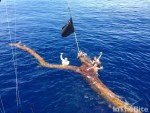 """The tree named """"Wilson"""" provides Nomad crew with a marlin trip of a lifetime!"""