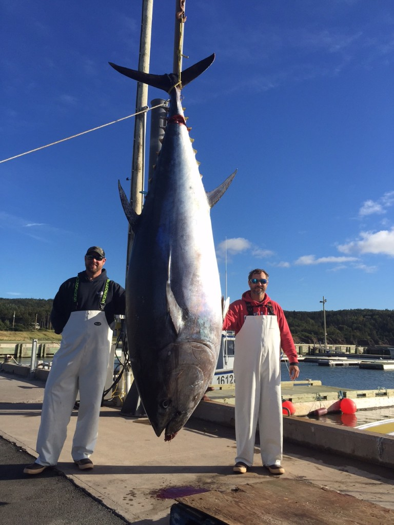 Inthebite video nova scotia bluefin trip 2015 for Tuna fishing video