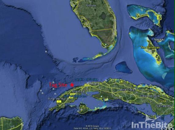 Cuba Dolphin Tags