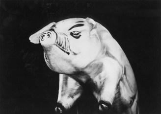 site-pig