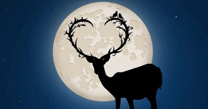 Love and the Moonlight
