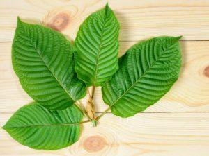 Kratom leaf on wood