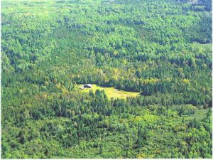 Maine Homestead surrounded by forest