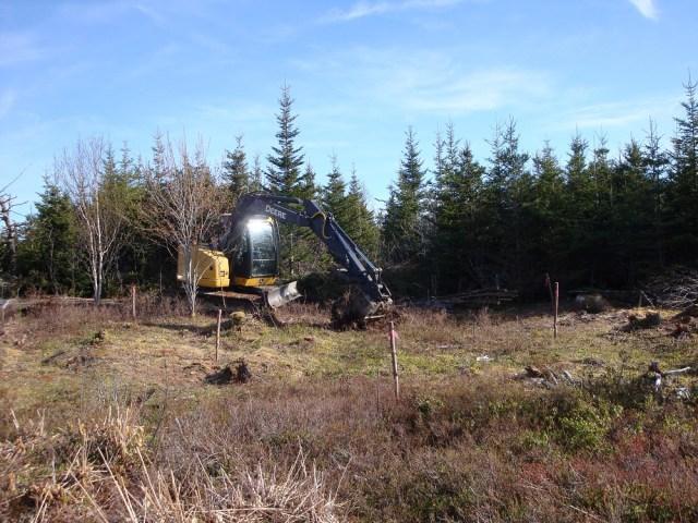 Excavator digging orchard tree holes