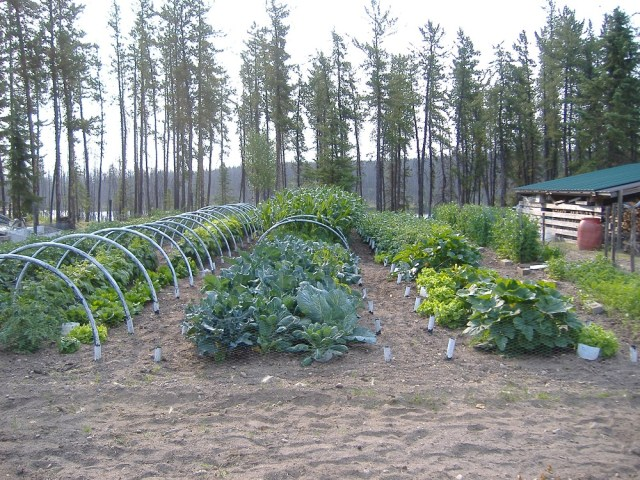 Our Saskatchewan Garden