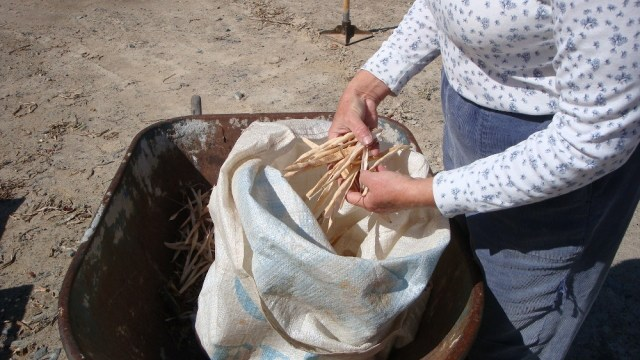 Threshed Beans in Grain Sack
