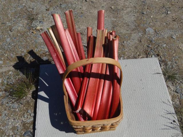 Basket of Trimmed Rhubarb Stalks