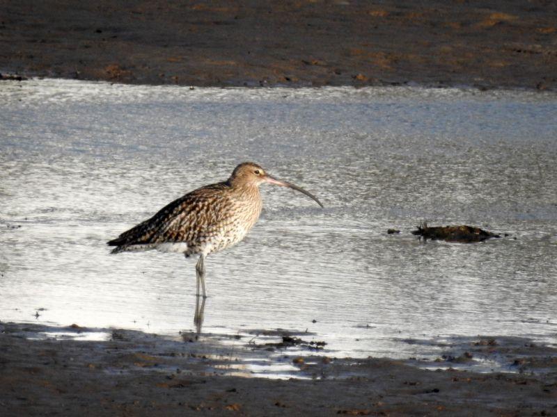 Birdwatching Guide Cornwall Birding in Cornwall Cornwall