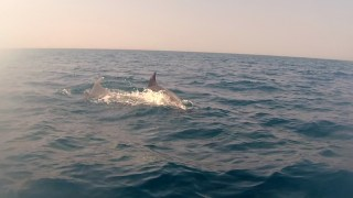 Dolphins off the coast of Castiglioncello