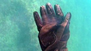 medusa-2016-10-28-19h33m10s4