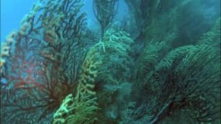 Scogliera Sommersa - Savalia Savaglia