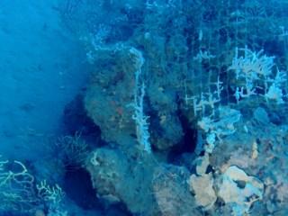 Rete Da Pesca Abbandonata Colonizzata Da Spugne - Abbandoned Fishing Net Colonized By Sponges - Intotheblue.it