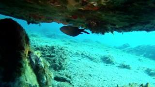 I pesci possono nuotare a testa in giù?