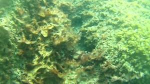 Mucilage on the coast of Livorno in the sea between Castiglioncello and Marina di Castagneto