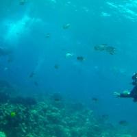 La Barriera Corallina di Sharm el-Sheikh