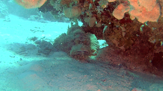 The Reef Stonefish
