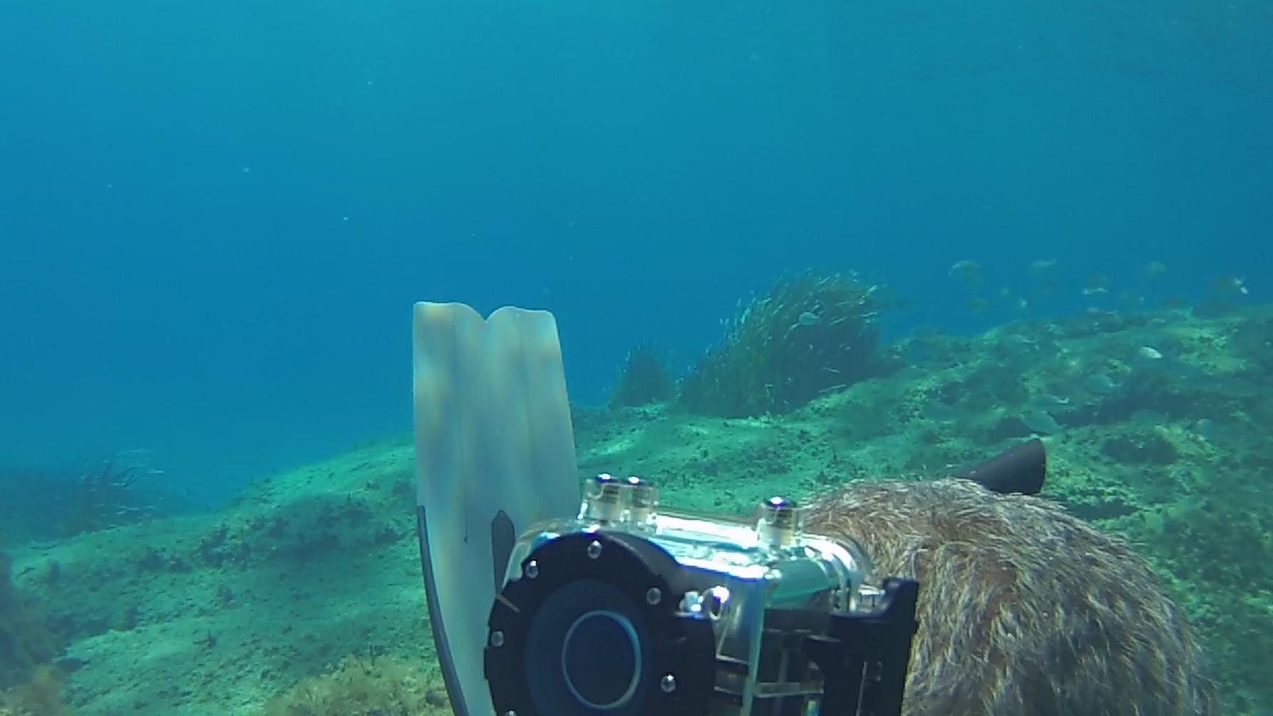 Freediving at Capo Carbonara Sardinia Intotheblue.it
