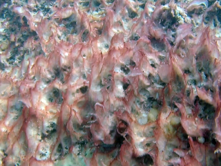 Mucillagine Causata Da Riscaldamento Marino -Mucilage Caused By Marine Heating - Intotheblue.it