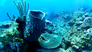 The Giant Barrel Sponge