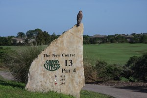 An interested spectator on the 13th tee