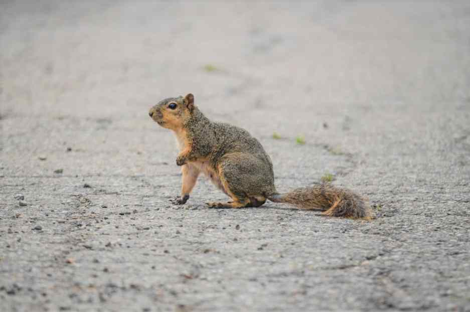 Why Do Squirrels Run In Front Of Cars & Stop In The Middle of The Road...