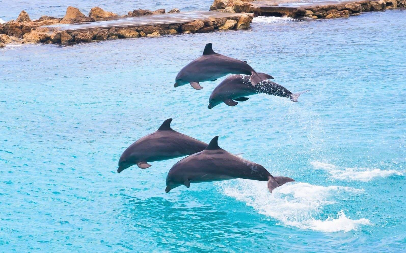 Why Dolphins Jump Out Of The Water Is it for Fun...