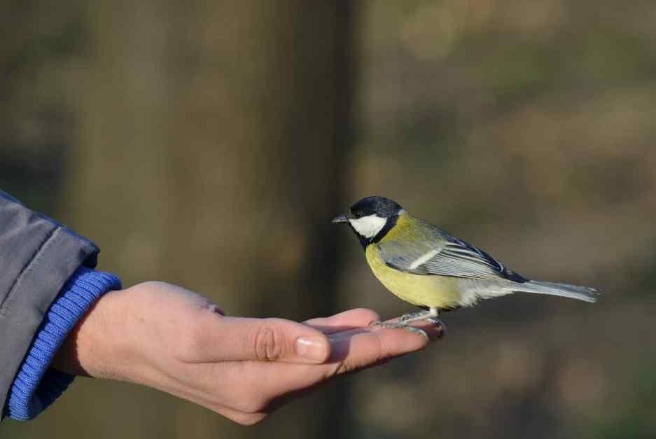 Birds sitting in hand