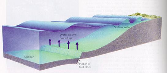 tsunami-terremoto