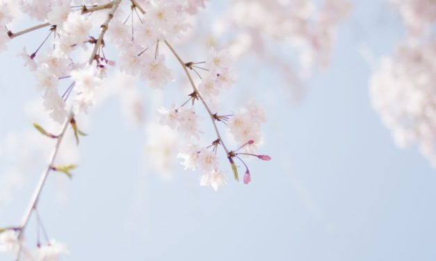 Beating the winter blahs: Prepare for spring!