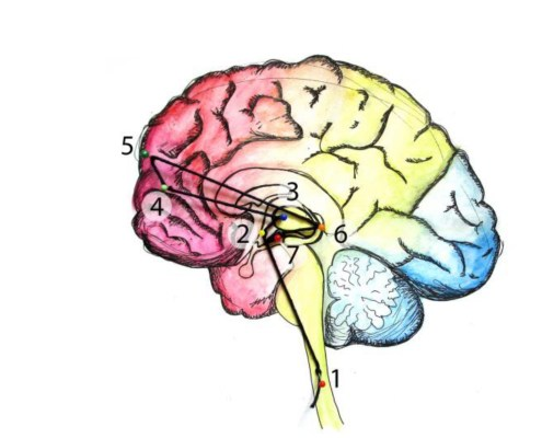 Ciência da Introversão e Extroversão