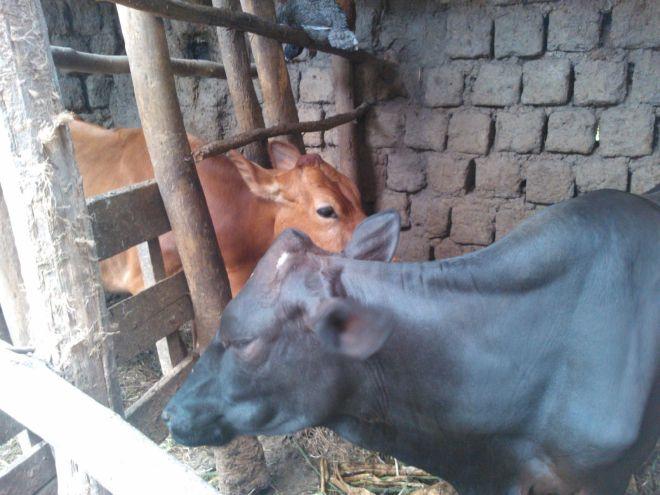 Ifoto inka y'ubumwe n'ubwiyunge intyoza.com