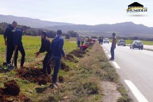 450 شجرة تمّ غرسها على طول أكثر من 2 كم