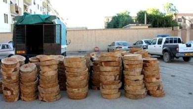Photo de Les cédraies de l'Aurès  à la merci des trafiquants