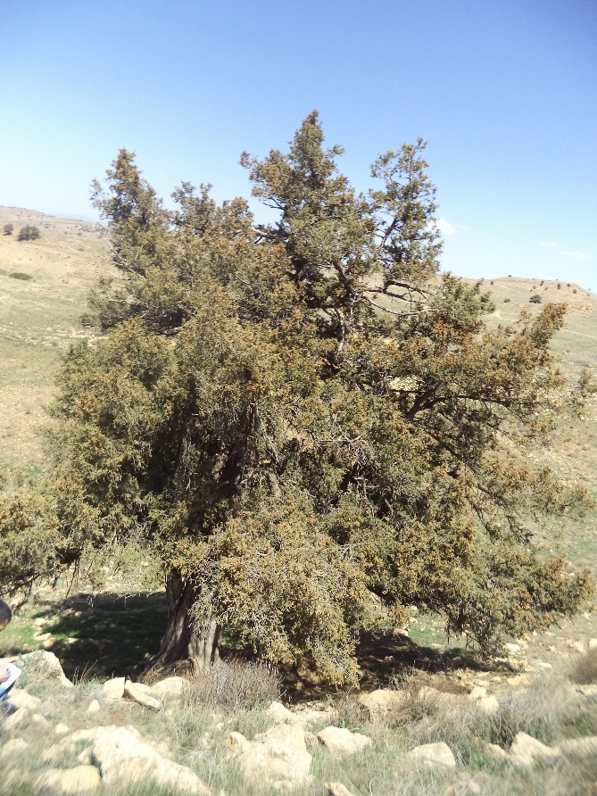 Photo 2: arbre vénéré avec des haillons dans la région de Hkoukth.