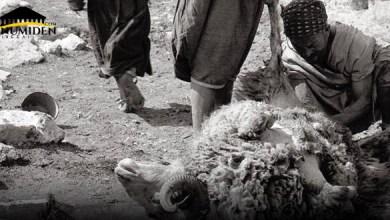 Photo de L'anecdote du vieux de Kebach qui refusait de manger la viande de l'Aïd