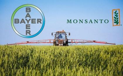 La Bayer acquista la Monsanto: OGM in Europa? E quali saranno gli effetti sull'agricoltura del Sud Italia?