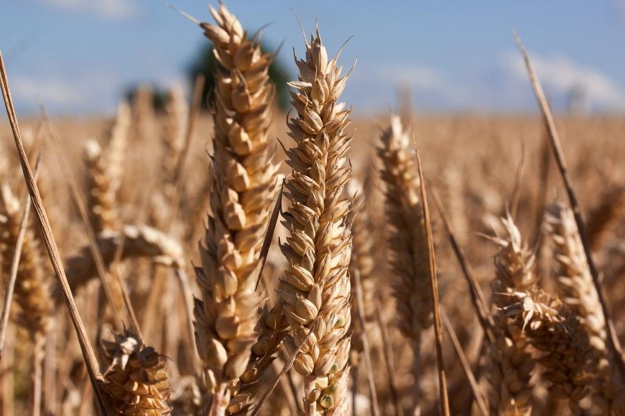 La battaglia per un grano duro pulito: solidarietà di GranoSalus a I Nuovi Vespri