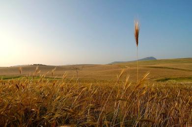 """Coldiretti: """"In Sicilia persi 270 ettari di superfice"""""""