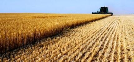 Barilla dice basta alla pasta con il grano duro canadese al glifosato