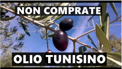 Scambi commerciali Italia-Tunisia: massacrata l'agricoltura siciliana. La beffa dell'olio d'oliva tunisino/ MATTINALE 161