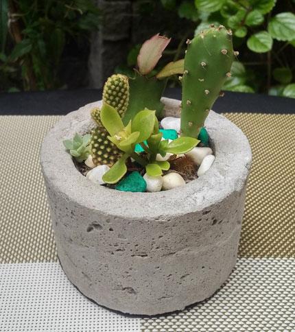 Mini Jardin Cemento - Plantas Reales - Foto frontal