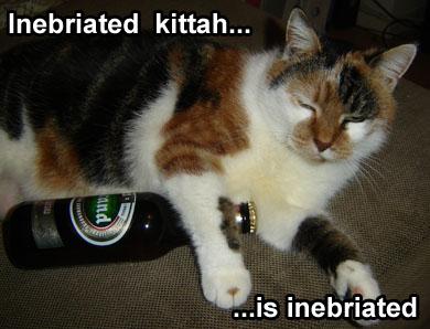 Drunk Cat 2