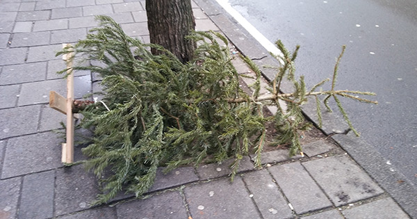 Abandoned Christmas Tree 1