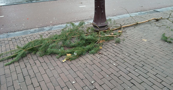 Abandoned Christmas Tree 2