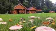 Isola di Compiano 43053 Compiano Tel. 0525 990321Cell. 3487519790 Web: www.residencecampoplano.it Ogni bungalow dispone di […]