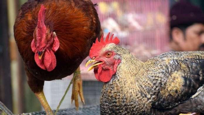 949114 chicken