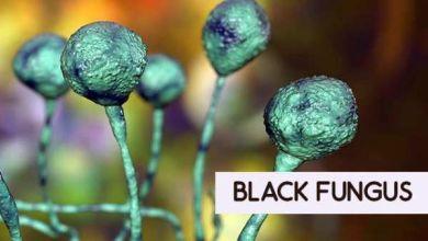 black fungus1 1620809809 1620971336 1